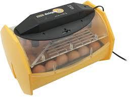 Best Egg Incubator 2021